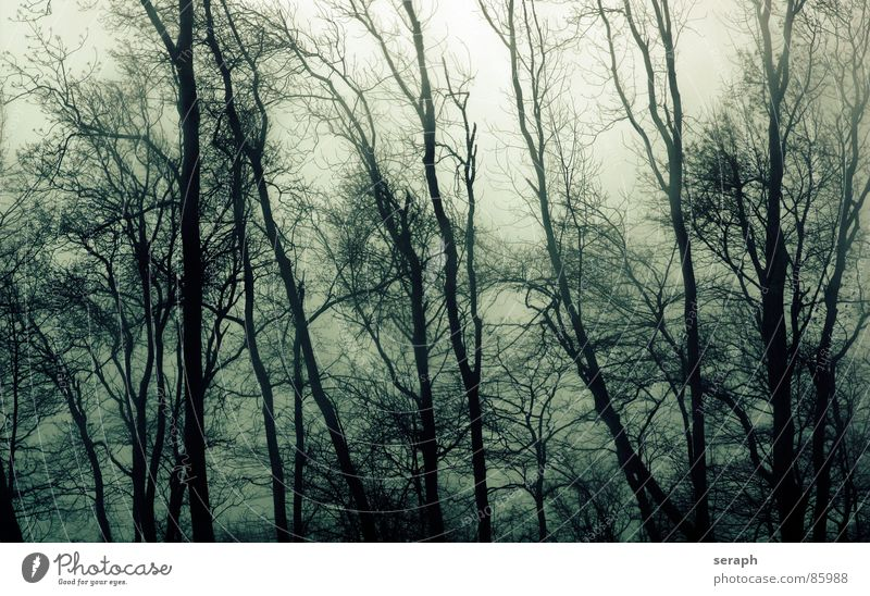 Nature Plant Tree Calm Sadness Movement Gray Moody Weather Gloomy Wind Branch Grief Tree trunk Twig Treetop