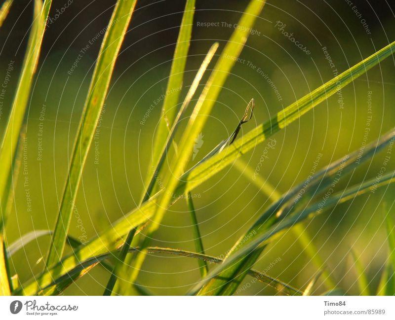 Green Summer Joy Meadow Emotions Grass Hope Enthusiasm Resign