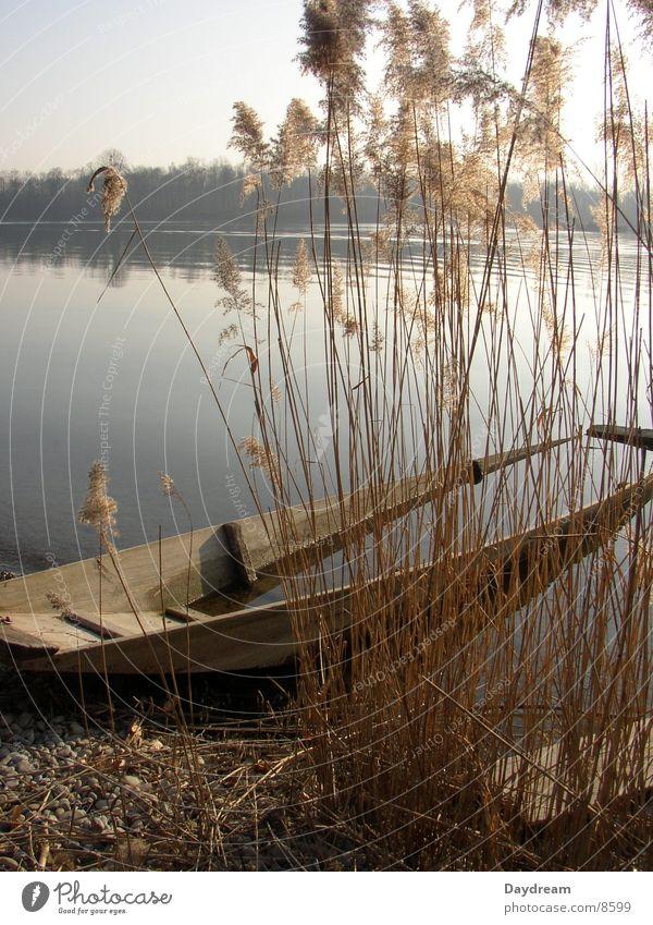 Water Lake Watercraft Coast Common Reed Flood