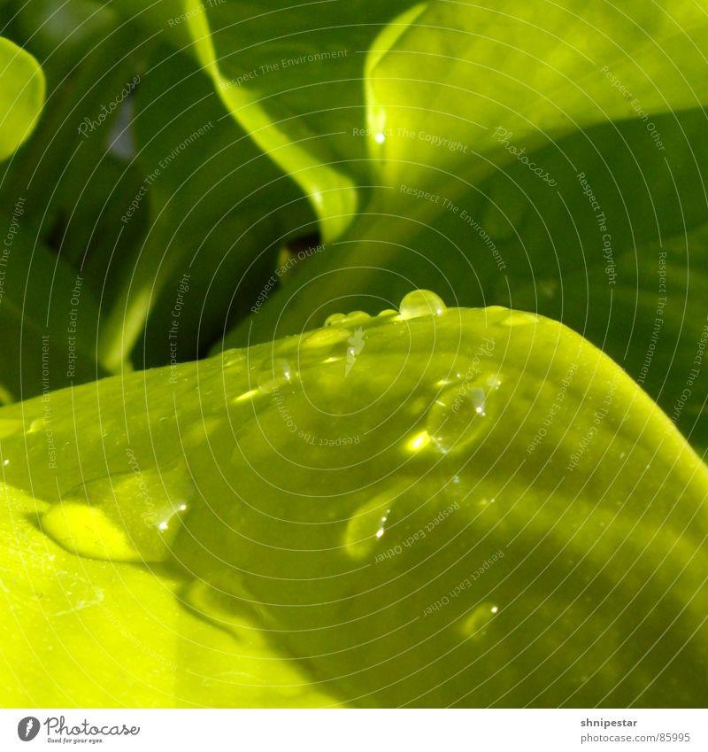 tri tra dripner Green Wet Damp Physics Summer Spring Near Botany Light Square Fluid Pastel tone Macro (Extreme close-up) Shadow Bright Liquid Close-up Power