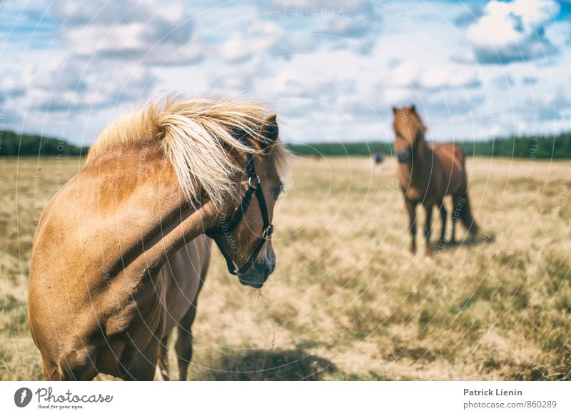 Don't Look Back Harmonious Well-being Contentment Leisure and hobbies Trip Freedom Summer Equestrian sports Environment Nature Landscape Sky Meadow Animal