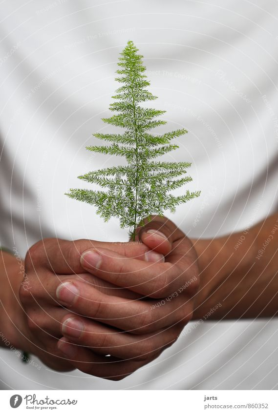 per Human being Hand Fingers 1 Environment Nature Plant Animal Tree Wild plant Sustainability Natural Protection fir tree guard sb./sth.
