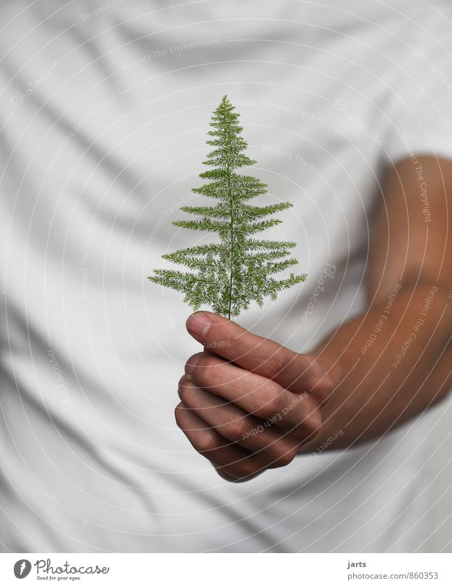 Human being Nature Plant Tree Hand Grass Masculine Fingers Gift Stop Fir tree Donate