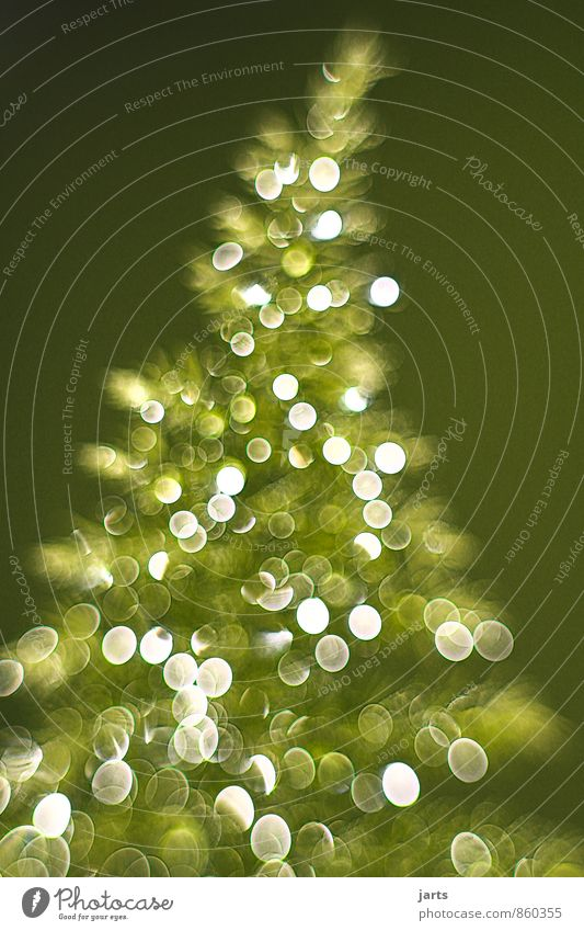 Nature Christmas & Advent Plant Tree Glittering Elegant Contentment Fresh Happiness Christmas tree