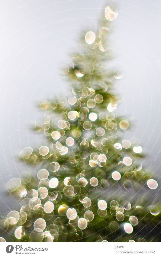 light tree 2 Christmas & Advent Drops of water Winter Plant Tree Happiness Contentment Anticipation fir tree Light Colour photo Exterior shot Close-up Deserted