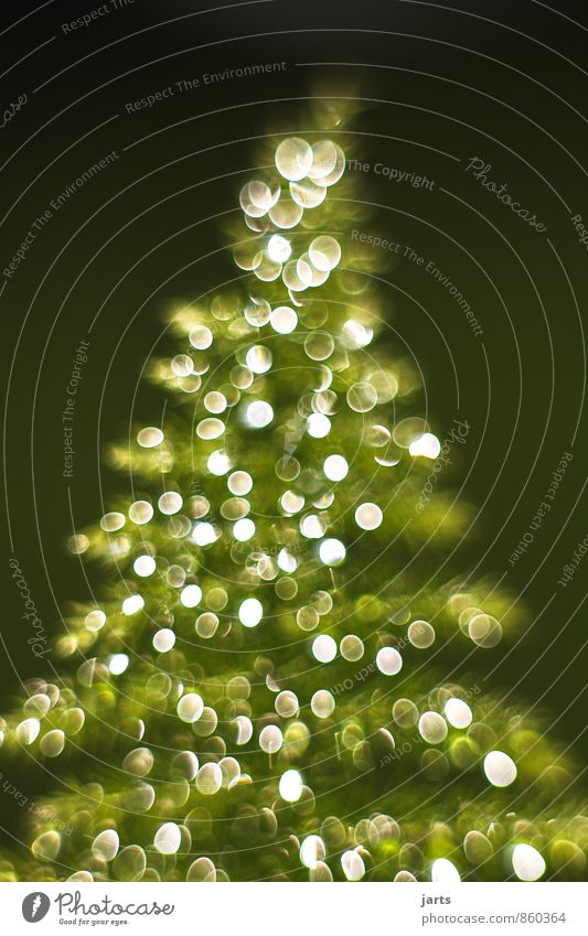 light tree 1 Christmas & Advent Drops of water Winter Plant Tree Happiness Contentment Anticipation fir tree Light Colour photo Exterior shot Close-up Deserted