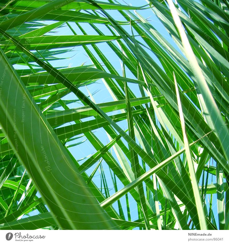 on the lookout ... Palm frond Green Palm tree Grass Meadow Perspective Blade of grass Worm's-eye view Environment Rejuvenate Fresh Small Square Summer Nature