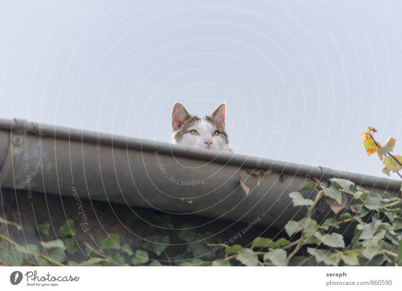 Lurking Cat Sky Beautiful Animal Observe Cute Roof Beauty Photography Climbing Pet Mammal Paw Awareness Domestic Kitten Fur coat
