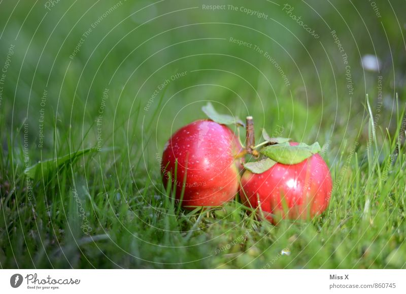 Favourite photo 2014 Food Apple Nature Summer Autumn Grass Meadow Lie Fresh Healthy Small Wet Juicy Sweet Red Twin Windfall Apple harvest Fruittree meadow