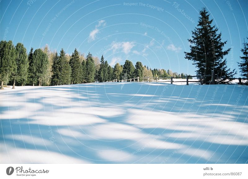 Vacation & Travel Sun Winter Snow Mountain Hiking Italy Fir tree Clearing