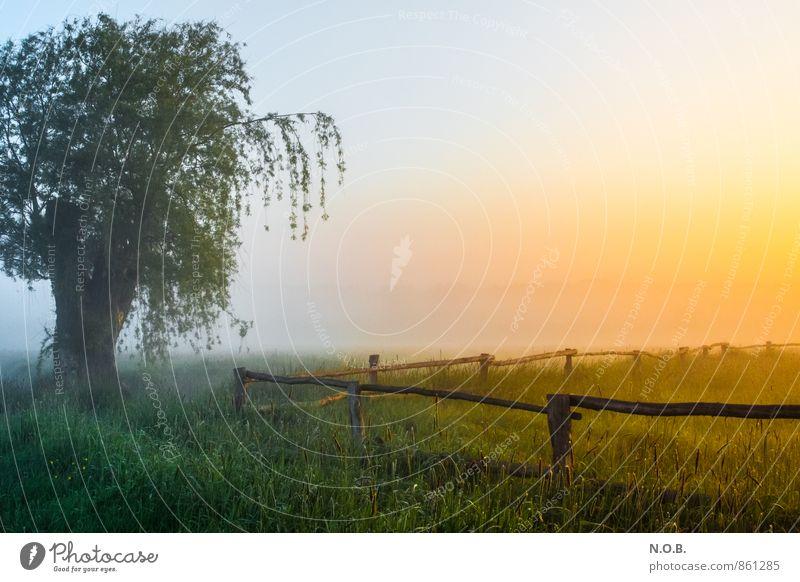 Sky Beautiful Green Summer Tree Landscape Calm Yellow Life Meadow Grass Moody Orange Field Fresh Esthetic
