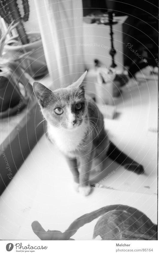 Animal Cat Flat (apartment) Desk Mammal Afternoon