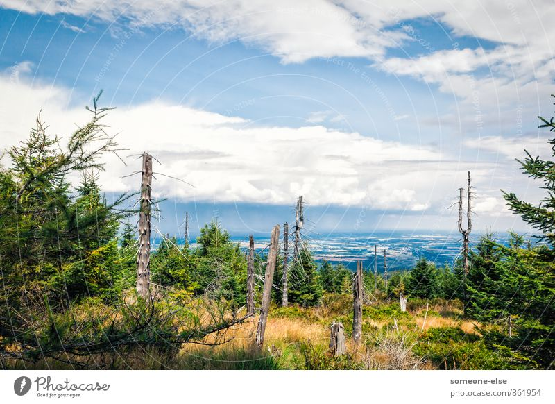 At eye level with the clouds Cycling Hiking Landscape Air Sky Clouds Rain Tree Mountain Esthetic Far-off places Blue Calm Contentment Infinity Forest Nature