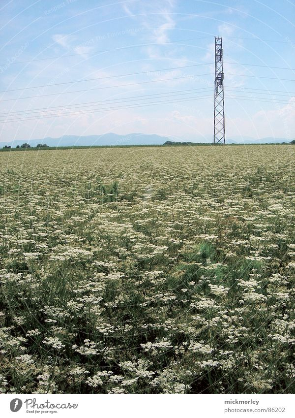 Nature Sky Flower Green Summer Life Meadow Spring Air Fresh Electricity Blade of grass Flower meadow Crunchy