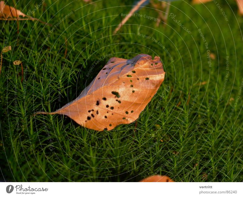 in the moss bed Eliminate Green Sunlight Hollow Wilderness Environment Leaf Law of nature Natural phenomenon Stalk Detail Nature Thin natural necessity Limp