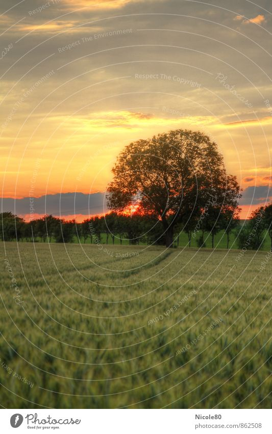 Sunset in the field Landscape Sunrise Summer Autumn Tree Field Loneliness Dusk HDR Colour photo Exterior shot Deserted Copy Space left Copy Space top