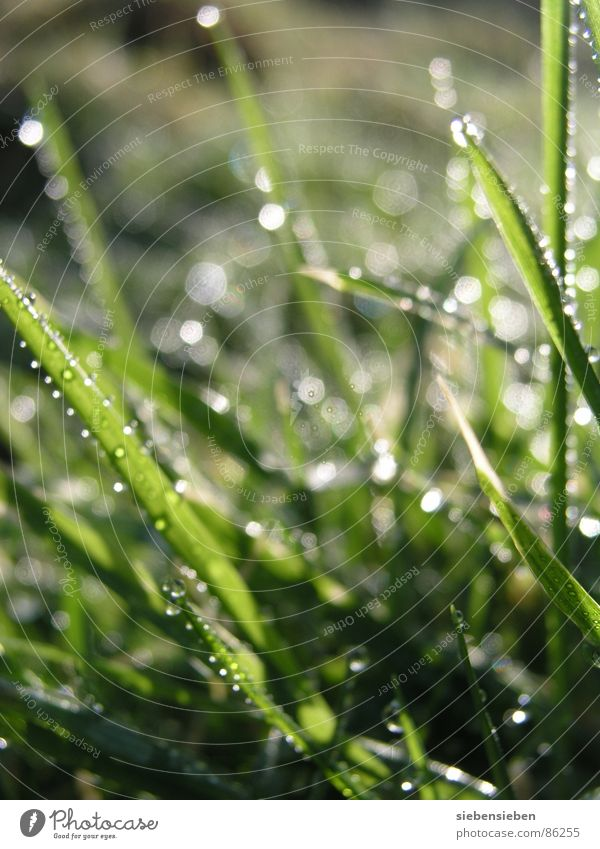 Good morning Lighting Beautiful Meadow Grass Blade of grass Green Drops of water Damp Wet Fresh Juicy Shaft of light Natural phenomenon Sunrise Bright