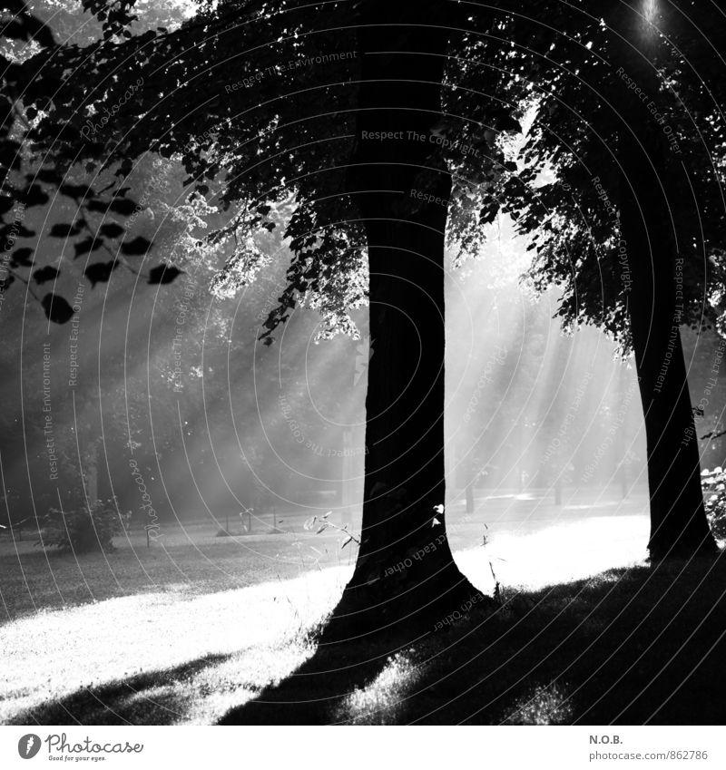 White Summer Tree Black Emotions Power Illuminate Fresh Hope Belief Optimism Breach