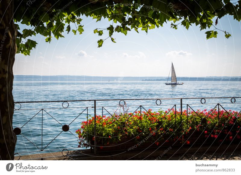 Sailboat on Lake Constance Aquatics Sailing Clouds Summer Tree Tourist Attraction Navigation Watercraft Blue Green Red White Vacation & Travel Window box Europe