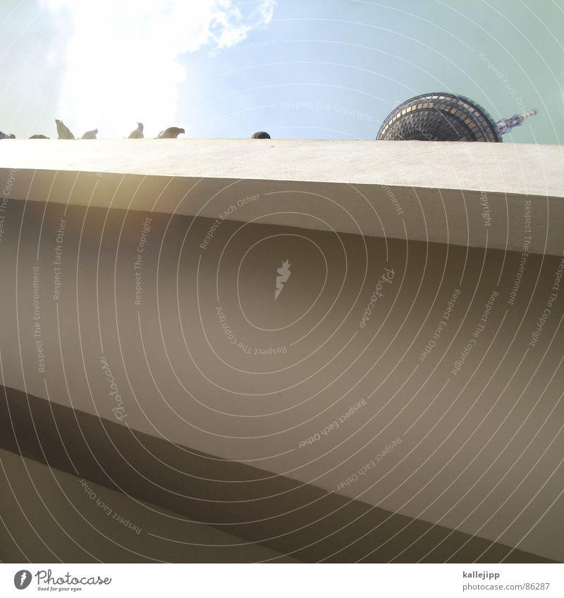 Sky City Sun Berlin Art Tall Feather Tower Level Middle Sphere Landmark GDR Tourist Attraction Pigeon