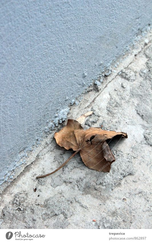 autumn Environment Nature Autumn Weather Plant Leaf Street Old Broken Natural Dry Blue Brown Gray Calm Sadness Loneliness End Cold Destruction Copy Space left
