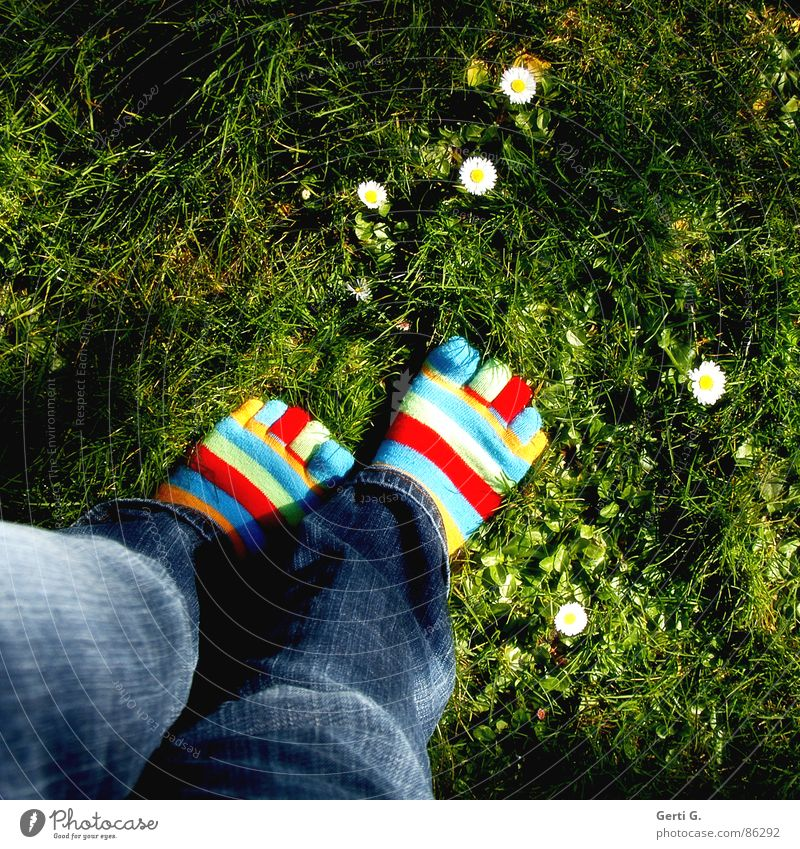 Joy Yellow Meadow Grass Spring Feet Legs Going Jeans Lawn Stockings Beautiful weather Daisy Toes Striped Parts of body