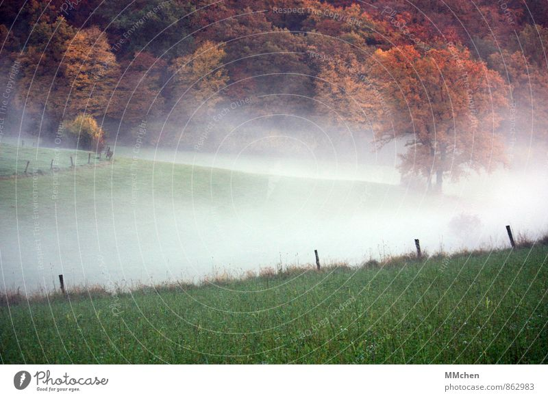 > Nature Landscape Earth Air Water Autumn Weather Fog Tree Meadow Field Forest Dream Brown Multicoloured Green Cold Environment Fence Fence post Grass Hill
