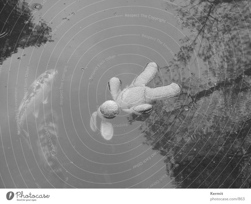 Sleep by the fishes Stuffed bunny Obscure Fish Water Black & white photo Carp Death