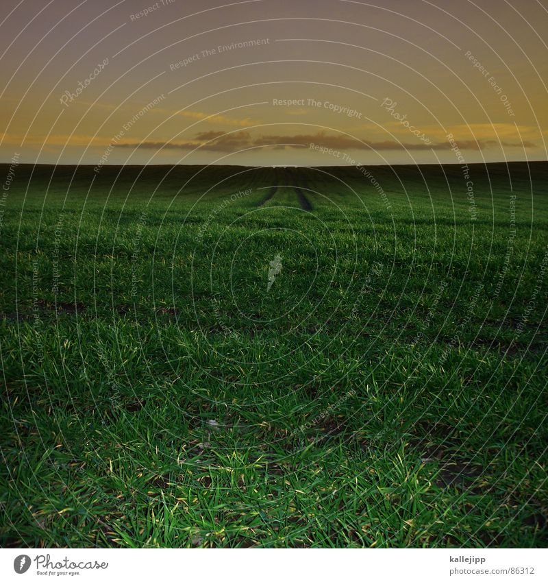 jürgen drews Crevice Tractor track Wheat Field Green Grass Cornfield Agriculture Central Central perspective Middle Horizon Structures and shapes Blade of grass