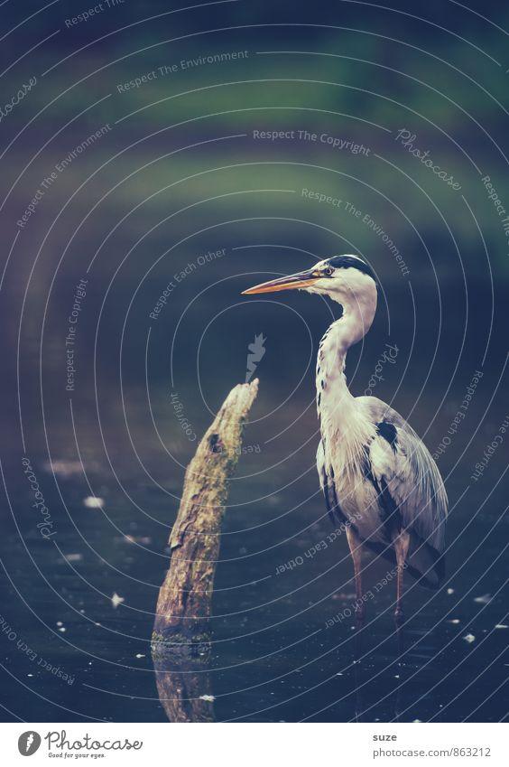 Nature Water Landscape Animal Dark Cold Environment Natural Lake Bird Wild Elegant Wild animal Authentic Stand Feather