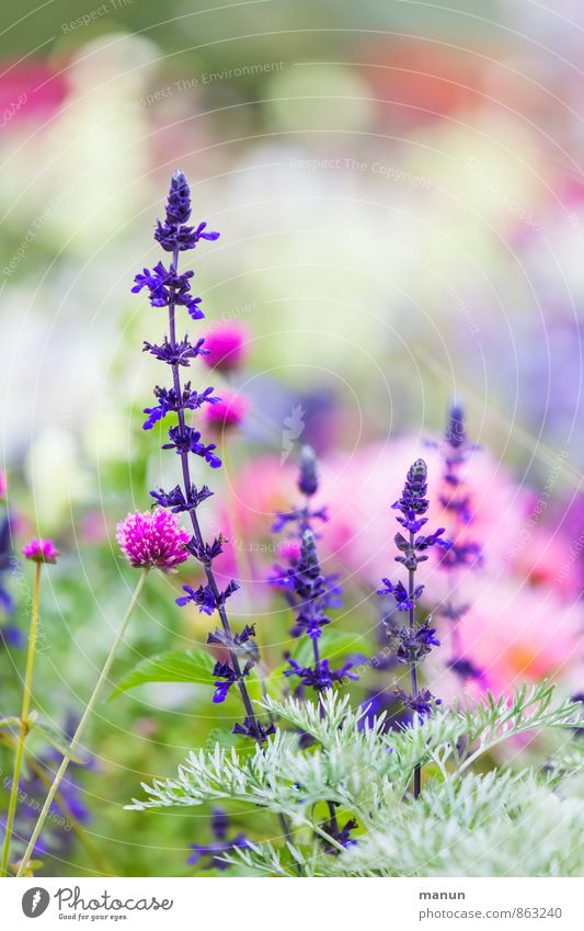 horticultural show Nature Plant Summer Flower Bushes Blossom Wild plant Garden Park Green Violet Pink Colour photo Exterior shot Deserted Copy Space top