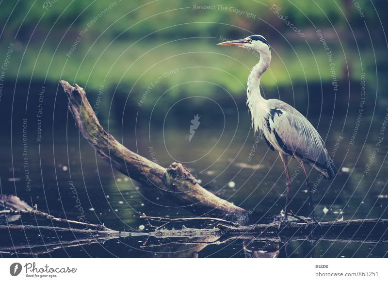 The fine Mr Strese Elegant Hunting Environment Nature Landscape Animal Water Lakeside Pond Wild animal Bird 1 Stand Wait Esthetic Fantastic Gray Green Moody