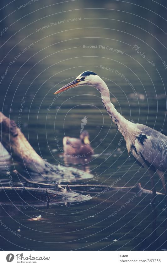 Nature Water Landscape Animal Environment Natural Lake Bird Wild Wild animal Wait Feather Wing Fantastic Observe Curiosity