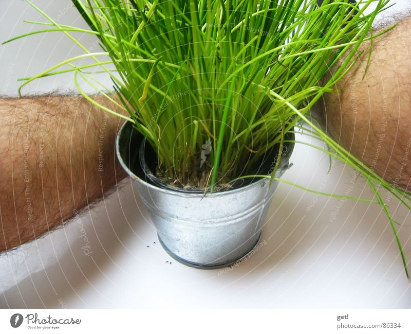 Green Plant Hair and hairstyles Legs Healthy Skin Disgust Chives