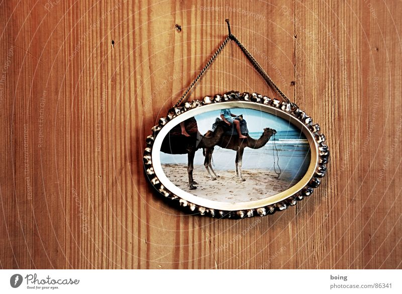 Vacation & Travel Beach Sand Simple Travel photography Picture frame Wooden wall Camel Dromedary Vacation photo Wood panelling Picture-in-picture