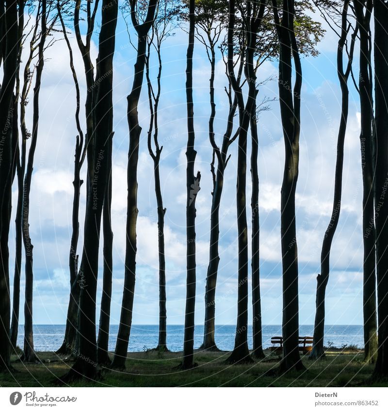 transparency Environment Landscape Water Sky Clouds Tree Grass Forest Coast Baltic Sea Blue Black White Ghost forest Mecklenburg-Western Pomerania Horizon
