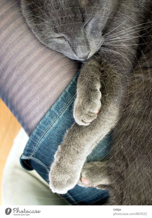 Cat Human being Woman Relaxation Calm Animal Adults Emotions Moody Friendship Lie Together Idyll Contentment To enjoy Warm-heartedness