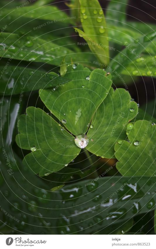 Nature Plant Green White Summer Leaf Environment Natural Small Garden Park Weather Rain Fresh Climate Drops of water