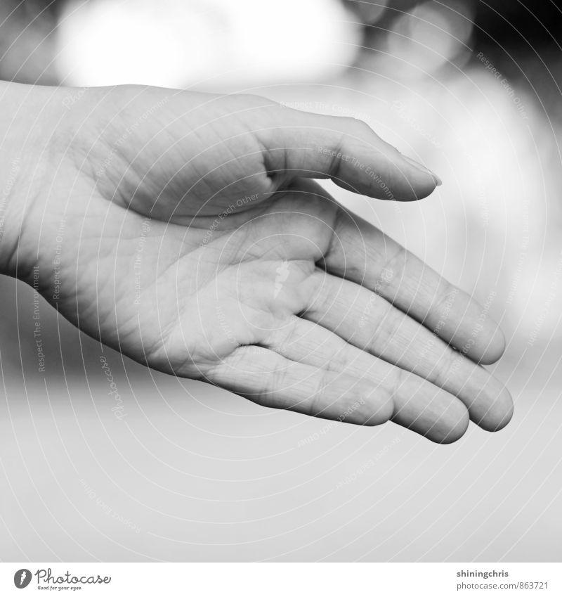 handshake Feminine Woman Adults Hand Fingers 30 - 45 years Success Gray Black White Willpower Brave Determination Acceptance Trust Safety Agreed Help Grateful