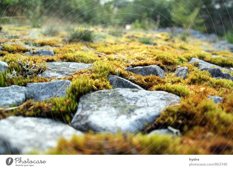 yin and yang Harmonious Relaxation Meditation Vacation & Travel Trip Summer Hiking Nature Landscape Plant Earth Beautiful weather Moss Weed Forest Rock Wetlands