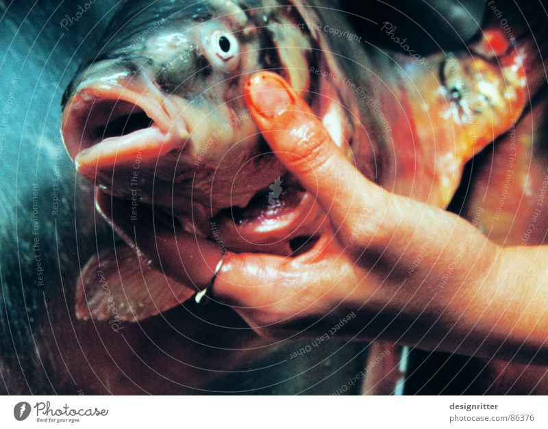 Hand Nutrition Death Fish To hold on Muzzle Fish eyes Carp Symbols and metaphors Retentive Fish head Fish mouth Loudmouth Women`s hand Dead animal