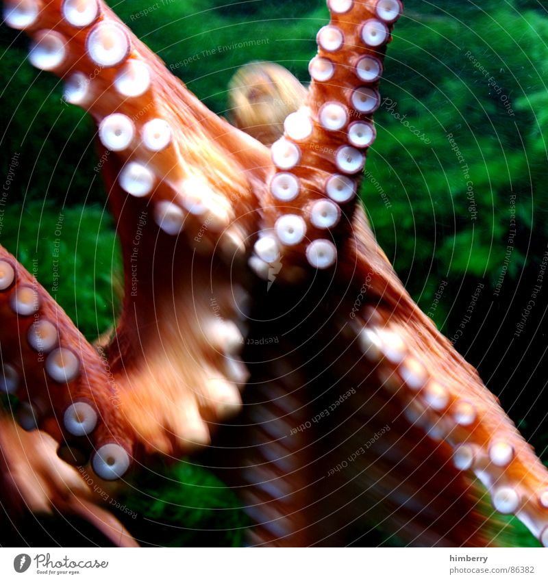 calamari Squid Octopus Ocean Animal Aquarium Green Ink Atlantic Ocean Fish Water cuttle Nature Colour Urine Excretion