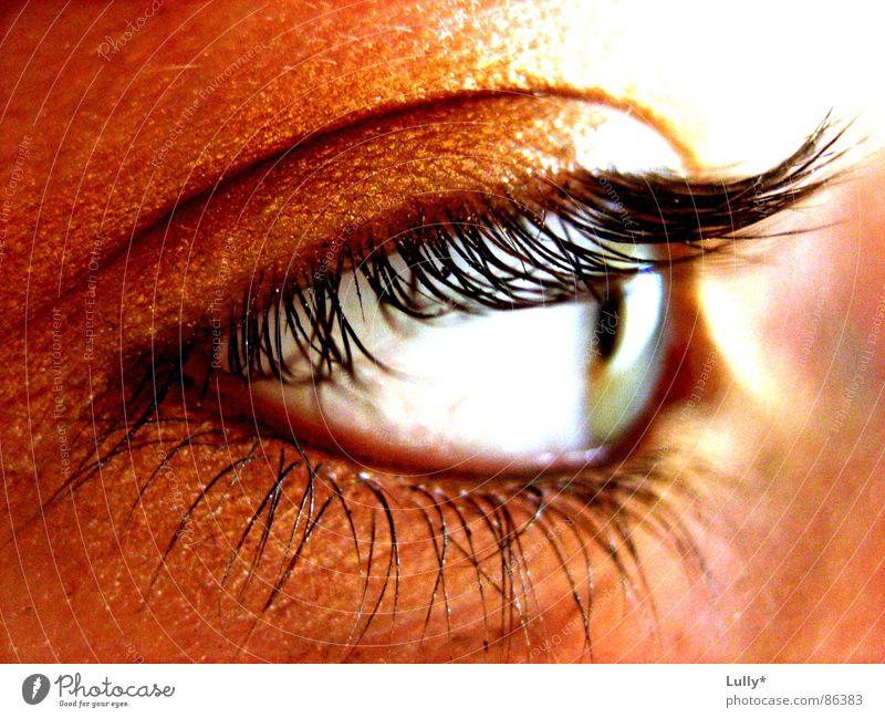 Blue Eyes Gold Near Deep Eyelash Iris