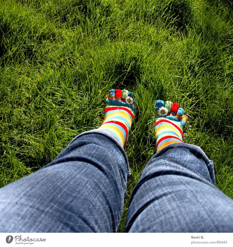 Summer Joy Yellow Meadow Grass Spring Feet Legs Jeans Lawn Stand Stockings Beautiful weather Daisy Toes Striped