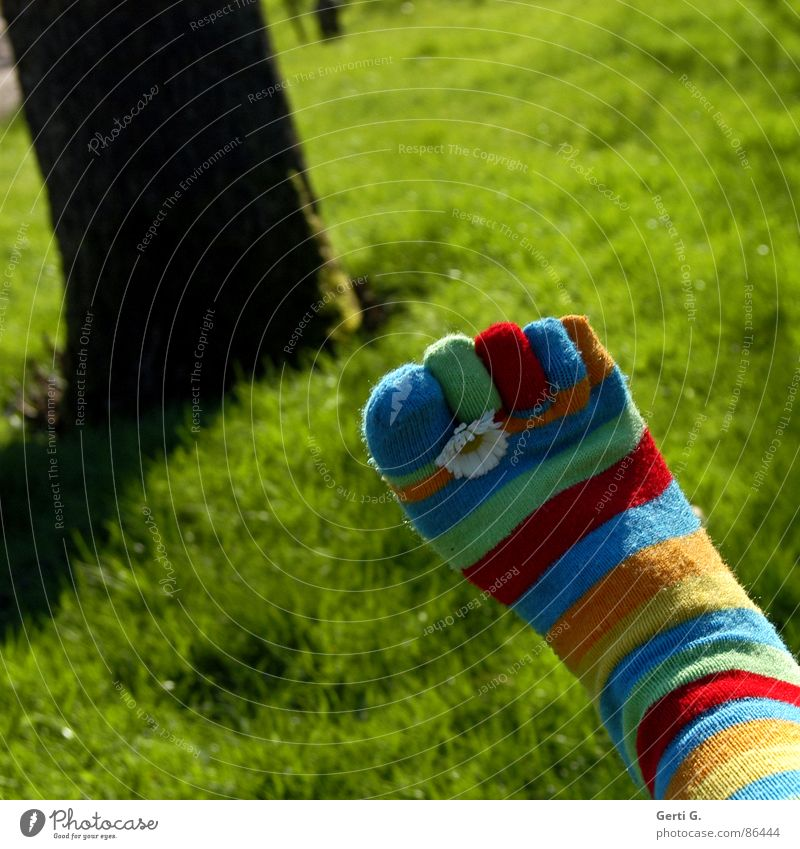 Summer Yellow Meadow Grass Spring Feet Lawn Tree trunk Stockings Beautiful weather Daisy Swing Toes Striped Juicy Parts of body