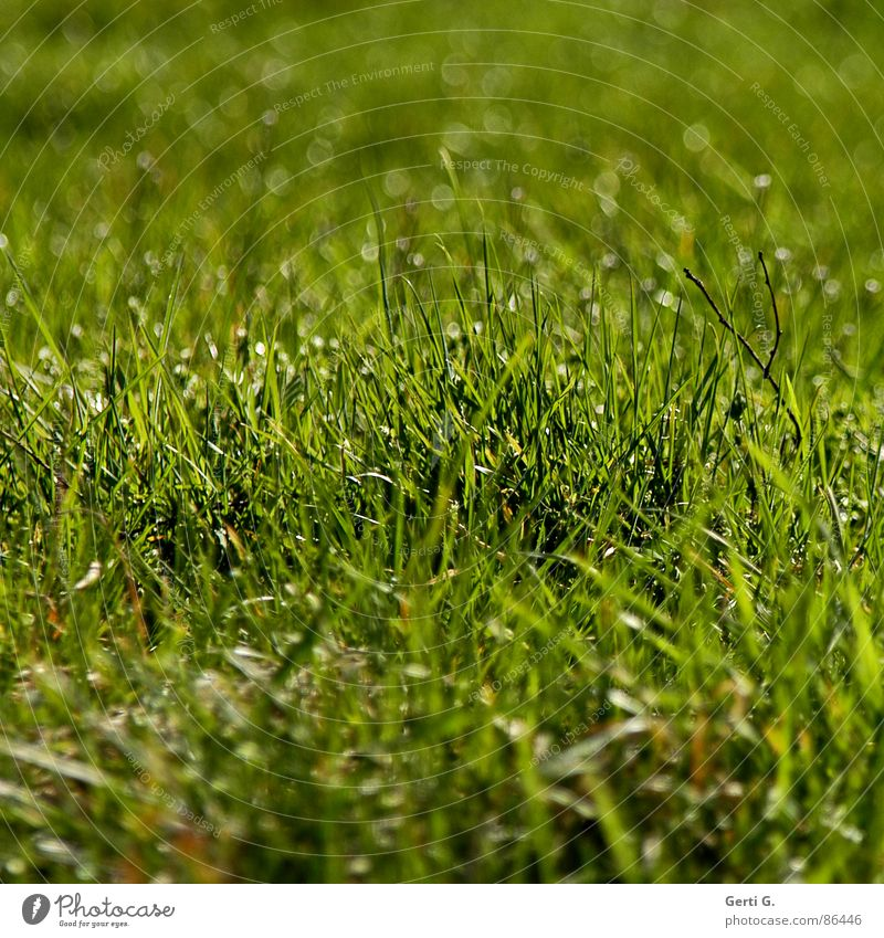 Green Joy Summer Meadow Grass Spring Bright Field Fresh Lawn Illuminate Part Agriculture Square Harvest Pasture