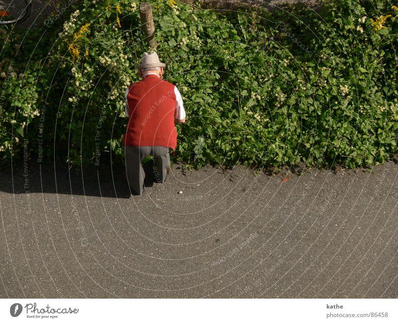 Human being Man Green Red Plant Leaf Street Senior citizen Lanes & trails Garden Park Search Bushes Asphalt Hat Pavement