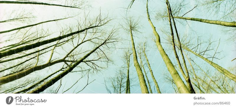 uplifted Leaf Autumn Environmental protection Bog Meadow Skeleton Cold Wood Winter steinhude Lomography horizon Sky Nature Branch Twig Skyward Tree trunk Large