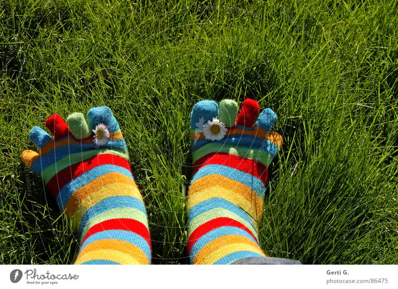 Summer Joy Yellow Meadow Grass Spring Feet Lawn Stockings Beautiful weather Daisy Toes Striped Juicy Parts of body Spring fever