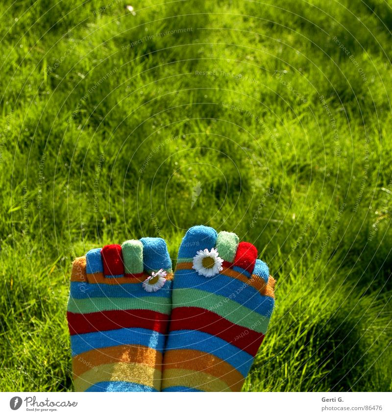 Spring Feet Part ... Stockings Striped socks Multicoloured Daisy Yellow Grass Meadow Toes Spring fever Sunlight Juicy Motion blur Joy Summer toe socks vernally